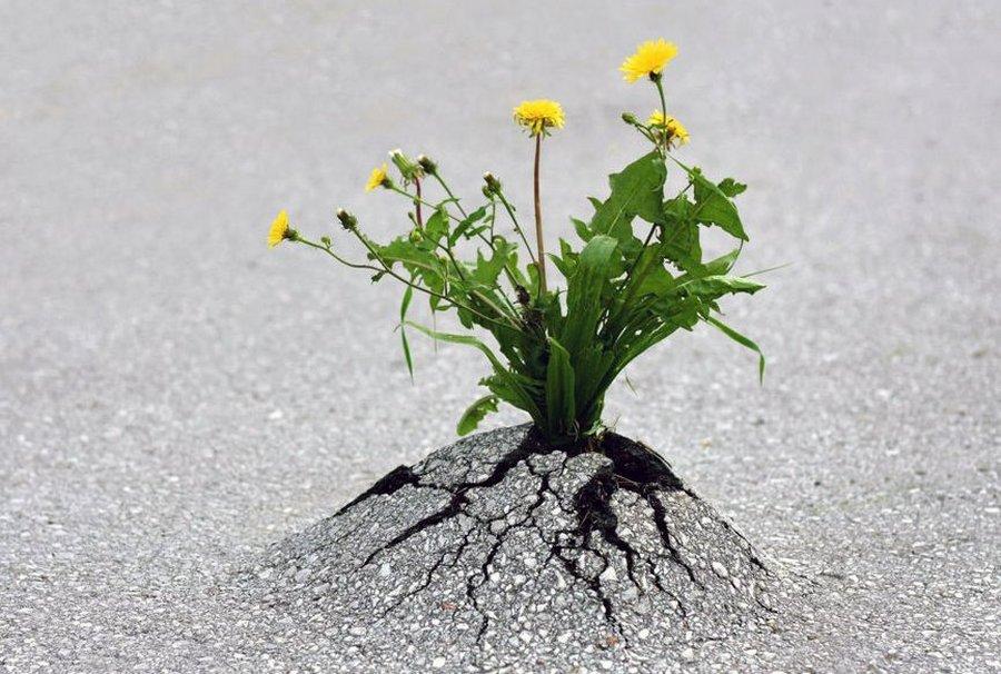 Под асфальтом не дышит земля…